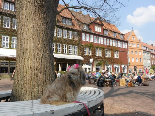 My dog Penelope at The Old Town | The Red Thread | Hannover, Germany