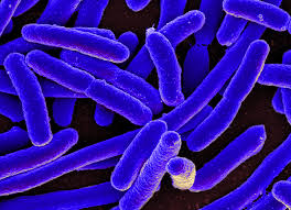 We have bacteria cells
