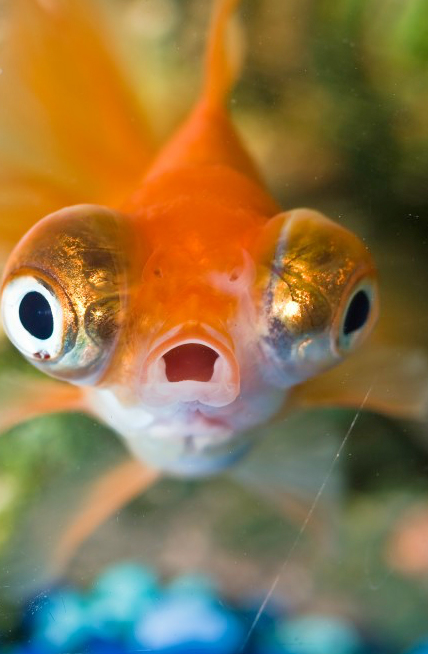 If you feel as surprised as this fish when the HR Investigator calls, stay calm and collect your thoughts.