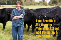 Four Benefits of Not Going to Veterinary School and Becoming a Veterinarian