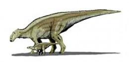 Replica of Maiasaura dinosaur