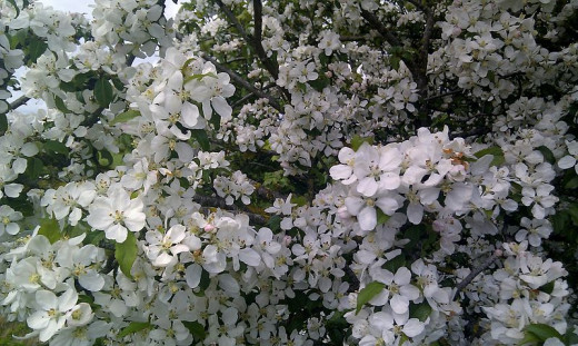 . . . The buildup of water on the pear tree finally gave way and splashed down on the sandy ground, bringing dozens of petals with it.