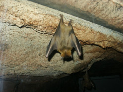 Four Ways That Bats Are Beneficial to Humans