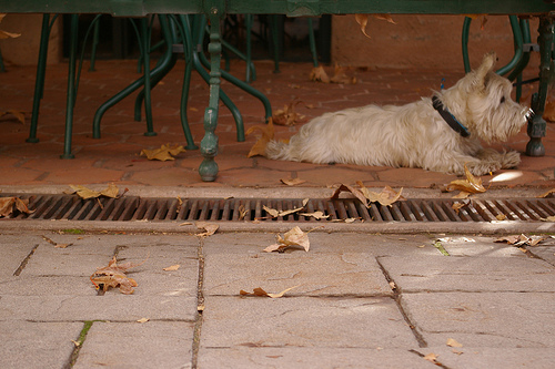 http://www.flickr.com/photos/fredcamino/2163240707/