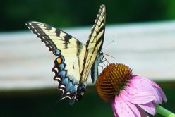 How to Attract Helpful Wildlife to Your Backyard Garden