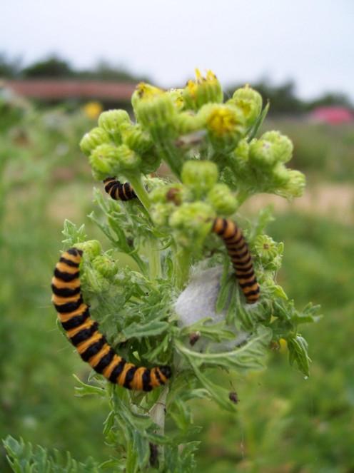 Caterpillars having a bite.