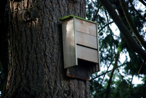 Example of a bat house.