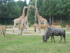 Wildlife: 3 things to do with family and kids in Hannover Germany