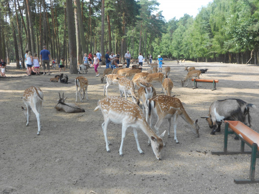 Serengeti Park, Hodenhagen, Germany