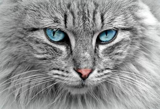 A cat of elegance.
