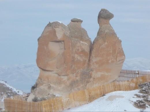 Natural Forces Sculpture a camel