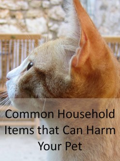 Common Household Items that Can Harm Your Pet