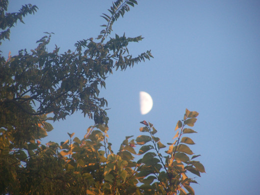 A crescent moon decorates the tree's top...