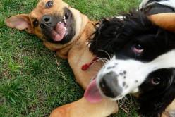 Three Ways to Socialize Your Dog