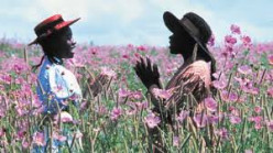 Different Shades of Purple in Alice Walker's novel The Color Purple