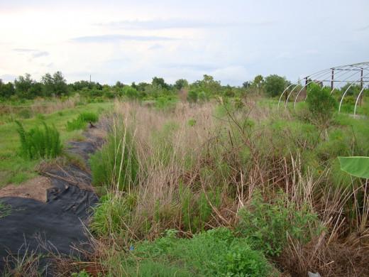 Overgrown grass on a farm?