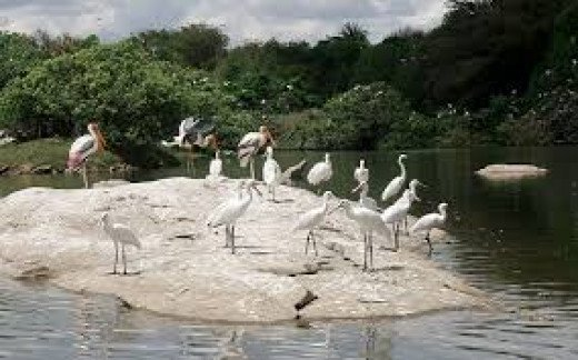 Ranganathittu Bird Sanctuary, Srirangapatnam