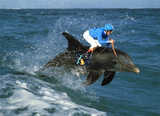 But just saddle up on the nearest dolphin and ride away from that big mean shark!