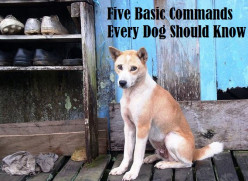 Five Basic Commands Every Dog Should Know
