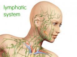 *Pathology of the Lymph Nodes*