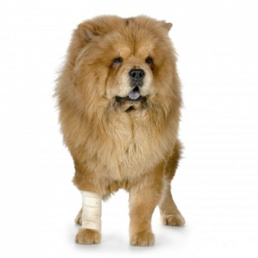 Assorted bandages, an important item in your canine first-aid kit!