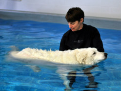 How to teach your dog to swim without driving it crazy?