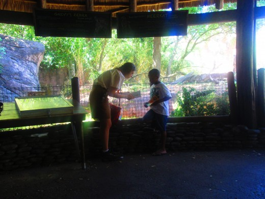 Animal Kingdom - My son earning a Junior Scouts Wilderness Lodge badge