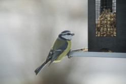 Bird Food Seed Blends Suet Pellets And More
