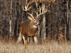 Hunting deer - here's everything you need to learn the basics