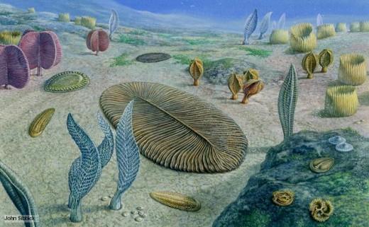 Precambrian life