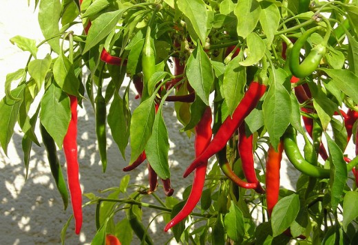 Cayenne pepper contains vitamins A, B1 and C .