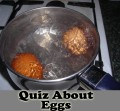 Quiz About Eggs And Additional Discussion