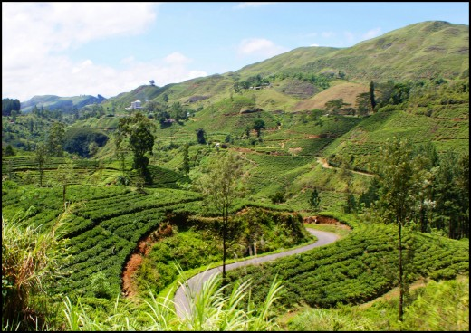 Beautiful places to visit in Sri Lanka upcountry