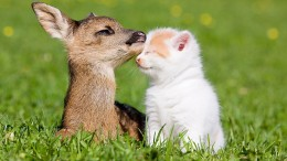 Fawn and cat