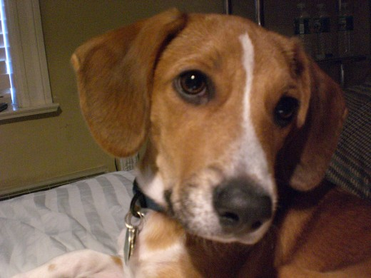 Prucha, the pup I adopted long-distance from a rescue in Arkansas in July 2007.