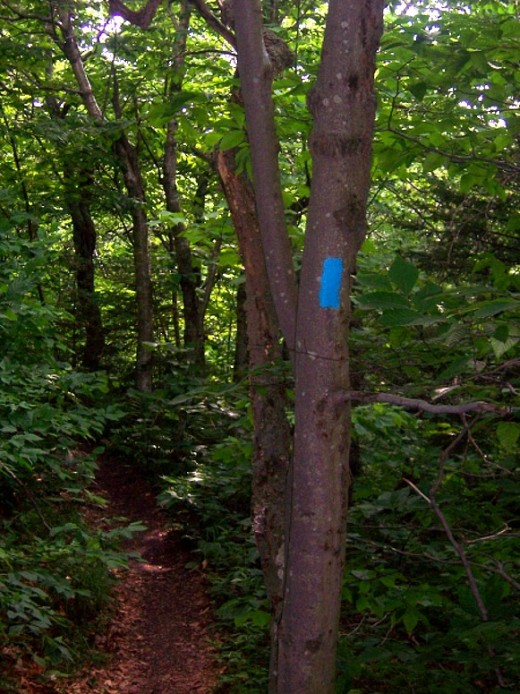 An example of a side-trail blue blaze, from Mount Greylock in Massachusetts