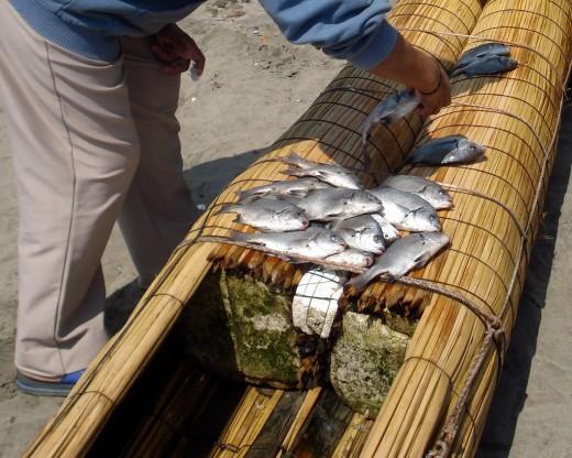Fishing in Pimentel, Perú.
