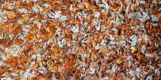 Michigan Autumn Colors