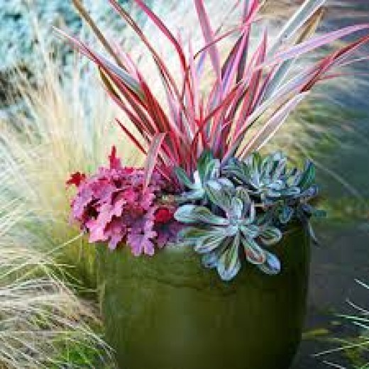 """This stunning container garden features water-wise  favorites like """"berry smoothie"""" coral bells, cordyline """"electric pink"""", and painted echeveria. The Mexican feather grass in the background sets it off with a light-catching halo."""