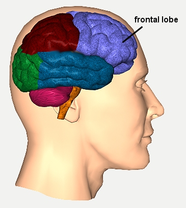 http://www.neuroskills.com/brain-injury/frontal-lobes.php