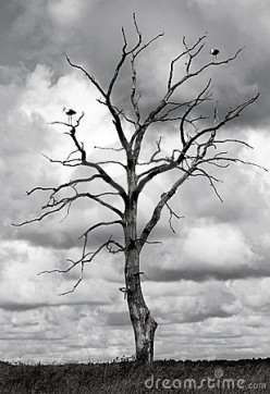 Dead Tree, Dead Me