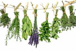 5 Herbal Remedies For The Most Common Complaints