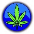 Marijuana's Variety: Understanding What They Are