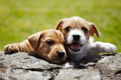 5 Most Popular Pets in America