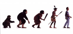 If man evolved from monkeys, how come we still have monkeys?