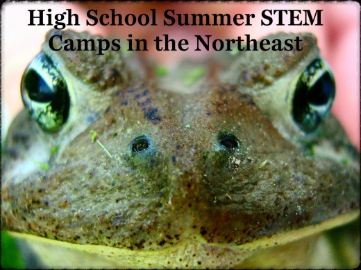 What do you have planned for the summer?  Don't waste time sitting at home.  Jump ahead of the game by enrolling in a high school STEM camp.
