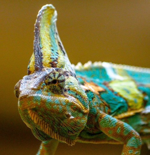 A chameleon at the Aluxes Ecoparque, outside of Palenque, Mexico.