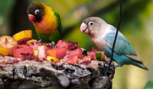 A variety of parrot or parakeets I'd never seen before