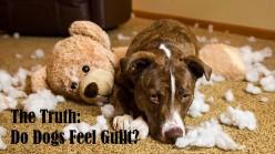 The Truth: Do Dogs Feel Guilt?