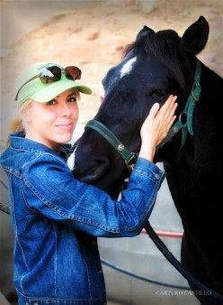 Animal healer seeks help reuniting mustang with the people who raised him